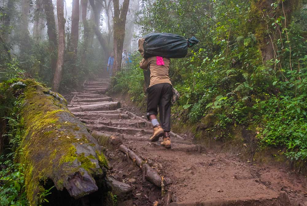 29483549 - a heavily ladened porter is heading up the trail to a campsite with a trekkers bag